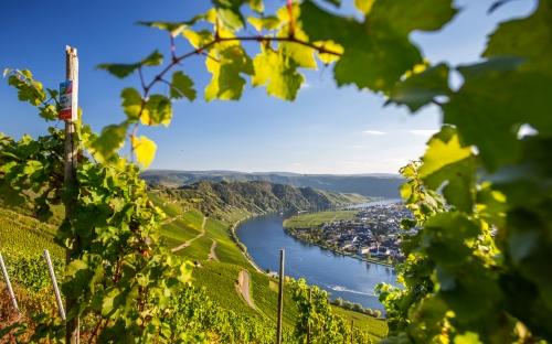 Mosel und Weinberge in Rheinland-Pfalz, Deutschland