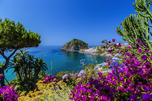 Ischia and Bougainvillea glabra