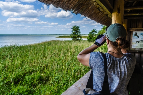 Vogelbeobachtung im Nationalpark Müritz