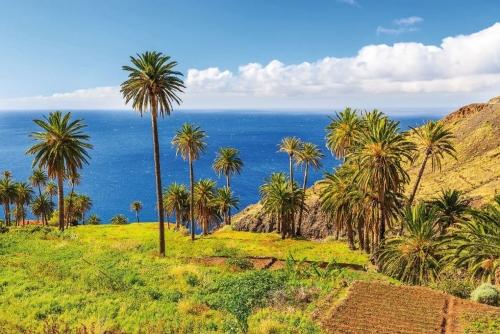 Palmen in tropischen Landschaft von der Insel La Gomera,Spanien