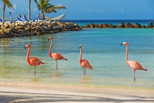 Vier Flamingos am Strand
