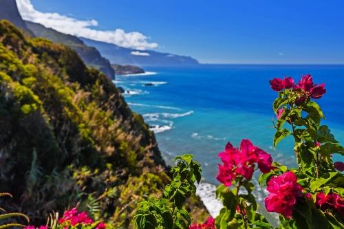 Blumen an der Küste in Boaventura - Madeira Portugal
