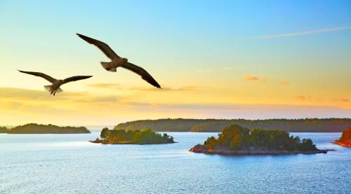 Wasserlandschaft mit fliegenden Möwen