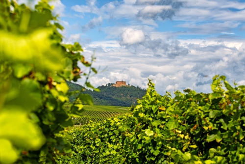 Hambacher Schloss an der Deutschen Weinstrasse